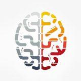 Beynimizin hangi yarım küresi daha baskın?