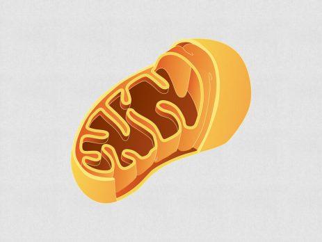 Mitokondriler ne işe yarar? Enerji yakıt depolarımız